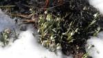 Первые цветы на Пасху