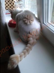 кот против грызунов